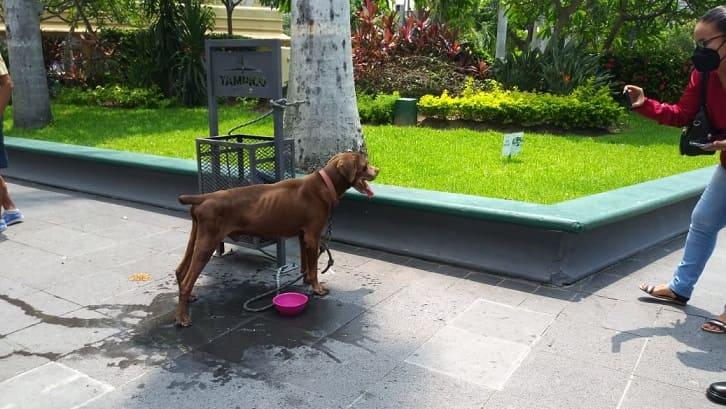 Abandonan a perro en la plaza